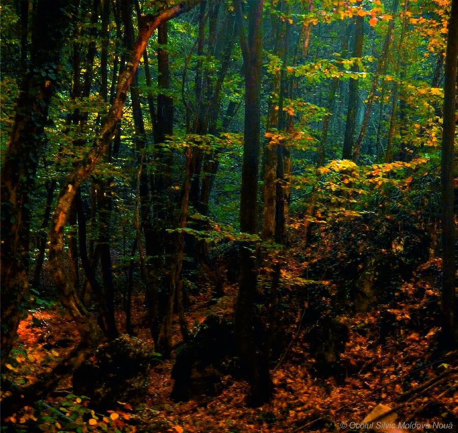 Zonă forestieră - împrejurimi Pensiunea Gernik